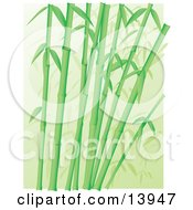 Forest Of Green Bamboo Stalks Clipart Illustration
