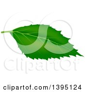 Clipart Of A Green Tree Leaf Royalty Free Vector Illustration