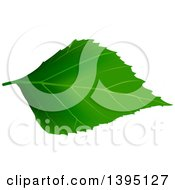 Clipart Of A Green Tree Leaf Royalty Free Vector Illustration by dero