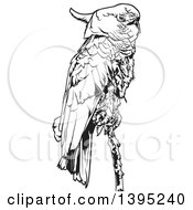 Clipart Of A Black And White Perched Cockatoo Bird Royalty Free Vector Illustration