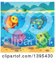 Clipart Of A Group Of Freshwater Fish Underwater Royalty Free Vector Illustration