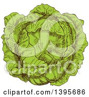 Clipart Of A Sketched Cabbage Royalty Free Vector Illustration by Vector Tradition SM