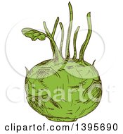 Clipart Of A Sketched Kohlrabi Royalty Free Vector Illustration by Vector Tradition SM