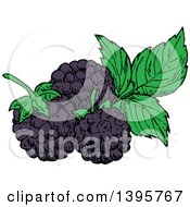 Clipart Of Sketched Blackberries Royalty Free Vector Illustration by Vector Tradition SM