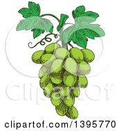 Clipart Of A Sketched Bunch Of Green Grapes Royalty Free Vector Illustration by Vector Tradition SM