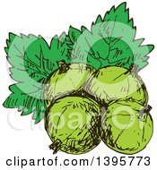 Clipart Of Sketched Gooseberries Royalty Free Vector Illustration