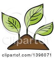 Sketched Seedling Plants