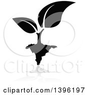 Clipart Of A Black Leafy Seedling Plant With A Gray Reflection Royalty Free Vector Illustration
