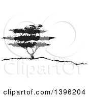Clipart Of A Black And White African Acacia Tree Royalty Free Vector Illustration