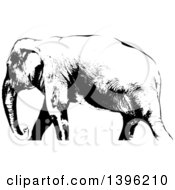 Black And White African Elephant Walking Cropped At The Ankles