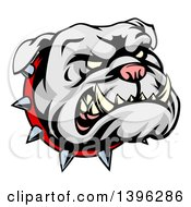 Clipart Of A Snarling Gray Bulldog Mascot Face With A Spiked Collar Royalty Free Vector Illustration