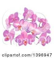 Clipart Of Purple Or Pink Orchid Flowers Royalty Free Vector Illustration by AtStockIllustration