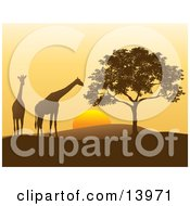 Two Giraffes And A Tree In Silhouette At Sunset In Africa Clipart Illustration
