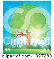 Clipart Of A Lush Tree With A Green Canopy Against A Sunny Sky Royalty Free Vector Illustration by visekart
