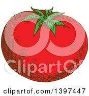 Clipart Of A Sketched Tomato Royalty Free Vector Illustration by Vector Tradition SM