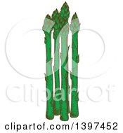 Sketched Group Of Asparagus Stalks