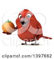 Clipart Of A 3d Red Bird Holding A Navel Orange On A White Background Royalty Free Illustration
