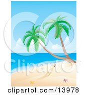 Poster, Art Print Of Message In A Bottle Near Two Starfish And Palm Trees On A Deserted Tropical Beach