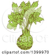 Clipart Of A Sketched Celery Root Royalty Free Vector Illustration