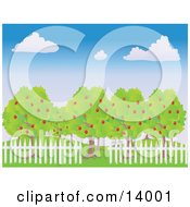 White Picket Fence Around Lush Apple Trees In An Orchard Under A Blue Sky With White Puffy Clouds Clipart Illustration