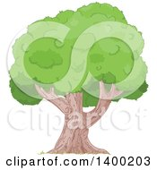 Clipart Of A Mature Tree With A Royalty Free Vector Illustration by Pushkin