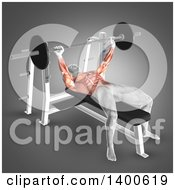 Clipart Of A 3d Anatomical Male Bodybuilder Working Out With Visible Muscles Used Doing Bench Press On Gray Royalty Free Illustration