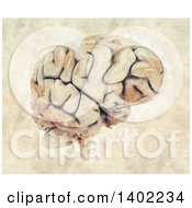Clipart Of A 3d Human Brain And Watercolor Splatters Royalty Free Illustration