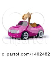 Clipart Of A 3d Camel Driving A Pink Convertible Car On A White Background Royalty Free Illustration
