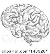 Clipart Of A Sketched Gray Brain Royalty Free Vector Illustration by Seamartini Graphics