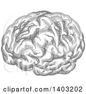 Clipart Of A Sketched Gray Brain Royalty Free Vector Illustration by Vector Tradition SM
