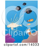 Lionfish Clownfish And Anemone With Other Fish On A Tropical Reef Clipart Illustration