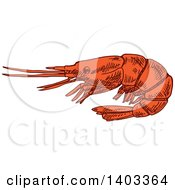 Clipart Of A Sketched Shrimp Royalty Free Vector Illustration by Vector Tradition SM
