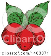 Clipart Of Sketched Coffee Berries Royalty Free Vector Illustration