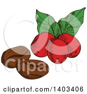 Clipart Of Sketched Coffee Beans And Berries Royalty Free Vector Illustration