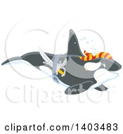 Clipart Of A Pirate Killer Whale Swimming Royalty Free Vector Illustration by Alex Bannykh