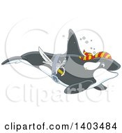 Clipart Of A Pirate Killer Whale Orca Swimming Royalty Free Vector Illustration by Alex Bannykh