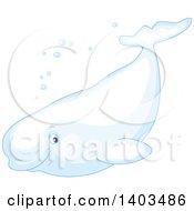 White Beluga Whale Swimming