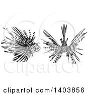 Black And White Woodcut Lionfish Shown In Profile And From The Front