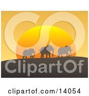 Three African Elephants In A Line Silhouetted While Passing On A Hill In Front Of The Orange Sun At Dusk Clipart Illustration
