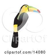 Keel Billed Toucan Ramphastos Sulfuratus Wildlife Clipart Illustration by Rasmussen Images #COLLC14080-0030