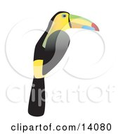 Keel Billed Toucan Ramphastos Sulfuratus Wildlife Clipart Illustration