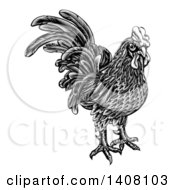 Clipart Of A Black And White Woodcut Styled Rooster Royalty Free Vector Illustration by AtStockIllustration
