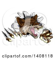 Clipart Of A Vicious Coyote Mascot Slashing Through A Wall Royalty Free Vector Illustration by AtStockIllustration