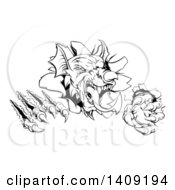 Clipart Of A Black And White Fierce Welsh Dragon Mascot Head Slashing Through A Wall Royalty Free Vector Illustration by AtStockIllustration