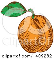 Clipart Of A Sketched Apricot Royalty Free Vector Illustration by Vector Tradition SM