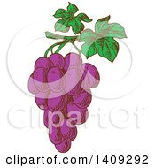 Clipart Of A Sketched Bunch Of Purple Grapes Royalty Free Vector Illustration