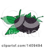 Clipart Of Sketched Blackberries And Leaves Royalty Free Vector Illustration