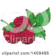 Clipart Of Sketched Raspberries And Leaves Royalty Free Vector Illustration