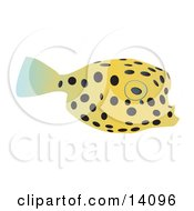 Cute Yellow Pufferfish With Black Spots Wildlife Clipart Illustration
