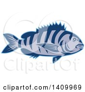 Clipart Of A Retro Swimming Sheepshead Fish Royalty Free Vector Illustration